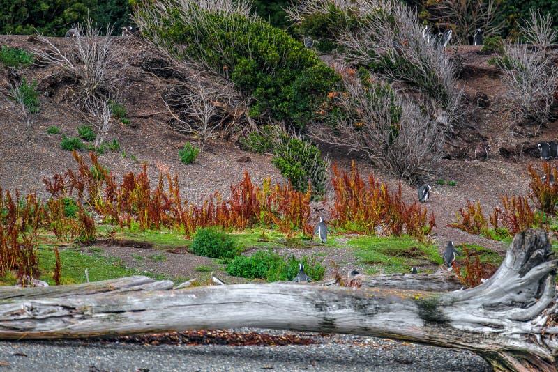 Schitterend landschap van Patagonië ` s Tierra del Fuego National Park royalty-vrije stock fotografie