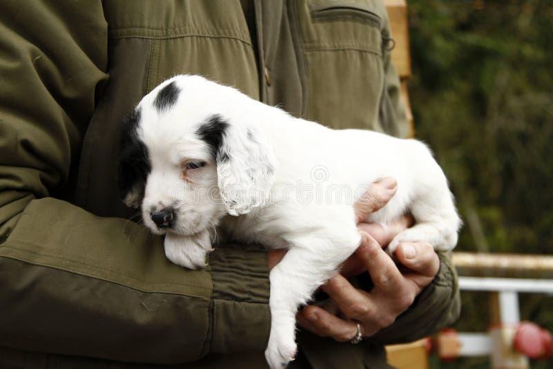 Schitterend Leuk Puppy stock foto