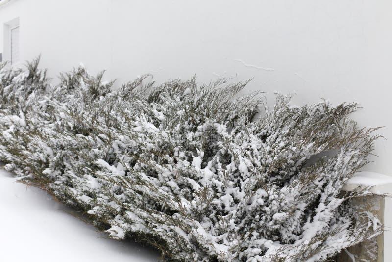 Schitterend winterlandschap royalty-vrije stock afbeelding