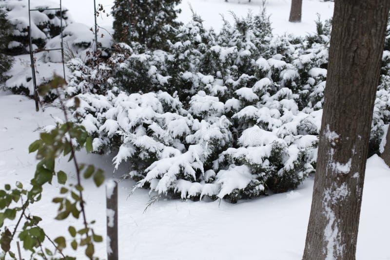 Schitterend winterlandschap stock foto