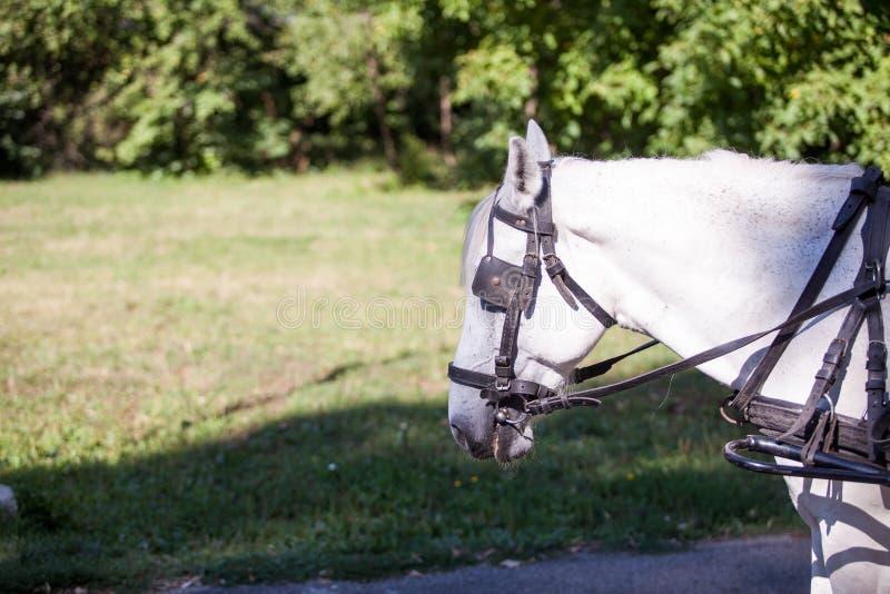 Schitterend wit paard in de aard stock afbeeldingen