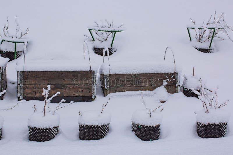 Schitterende de wintermening van buitenkant van een privé tuin in plastic potten Aardbei het groeien in palletkraag, met sneeuw w royalty-vrije stock afbeeldingen