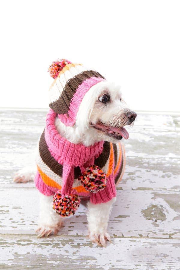 Schitterende hond royalty-vrije stock afbeelding