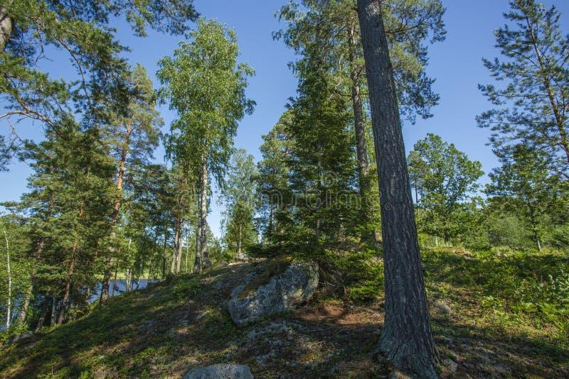 Schitterende mening over aardlandschap op de zomerdag Boslandschap met groen bomen, struiken, installaties en meer stock foto