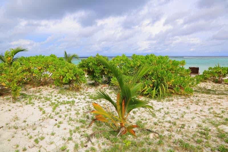 Schitterende mening van wit zandstrand Jonge groene palmen op turkoois water en blauwe hemel met witte wolkenachtergrond royalty-vrije stock afbeelding
