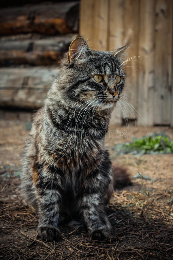 Schitterende pluizige kattenzitting op de weg royalty-vrije stock foto's