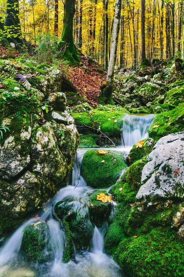 Schitterende scène van kreek in kleurrijk herfstbos stock afbeeldingen