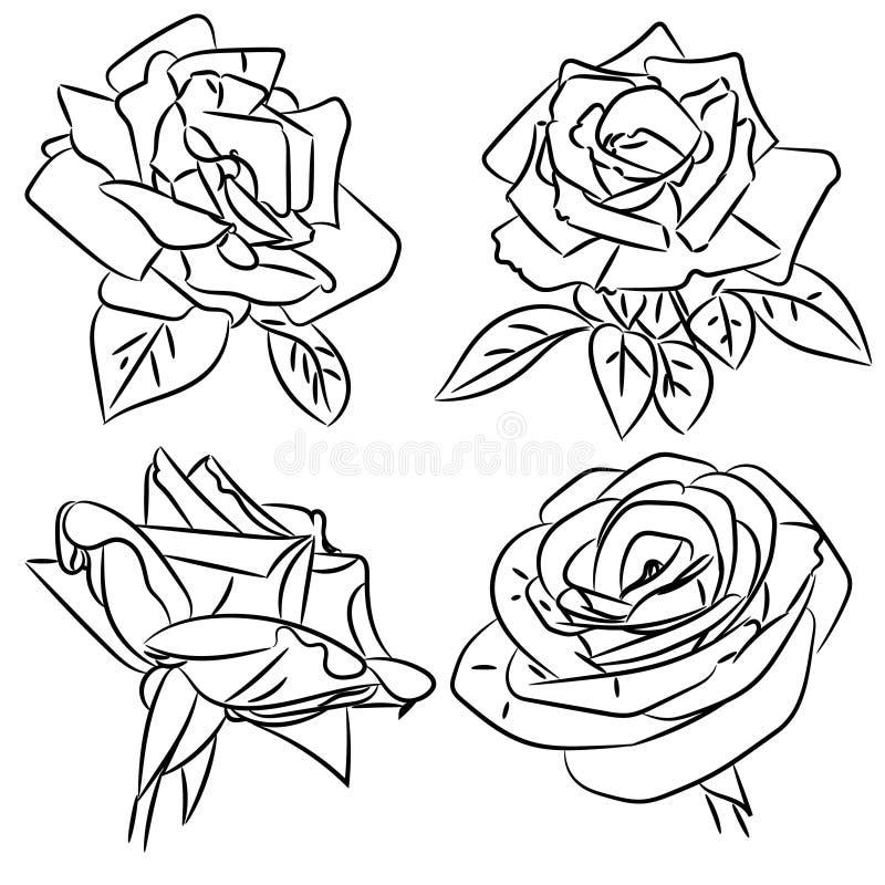Download Schizzi In Bianco E Nero Delle Rose Illustrazione Vettoriale - Illustrazione di botanica, foglio: 55361802