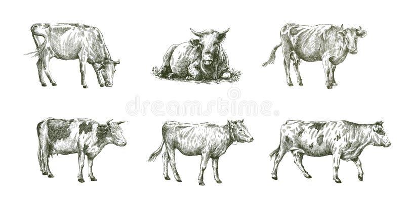 Schizzi delle mucche disegnate a mano bestiame bestiami pascolo animale illustrazione vettoriale