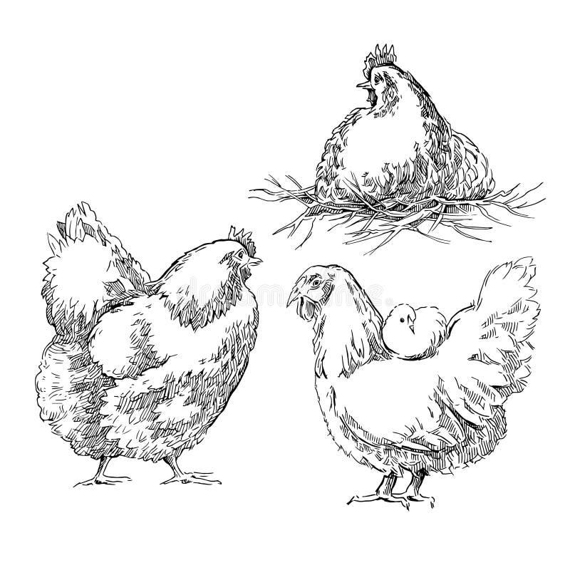 Schizzi di Chiken illustrazione vettoriale