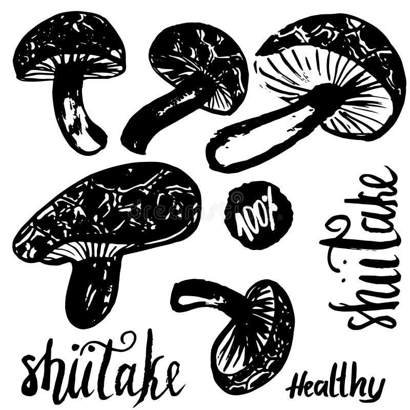 Schizzi l'illustrazione disegnata a mano di vettore dei funghi dello shiitake isolata su fondo bianco con iscrizione Insieme dei  illustrazione vettoriale
