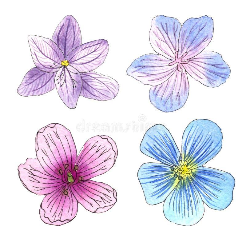 Schizzo dei fiori selvaggi con l'acquerello su un fondo bianco illustrazione di stock