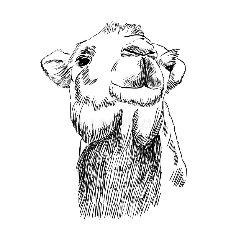 Schizzo del cammello illustrazione vettoriale