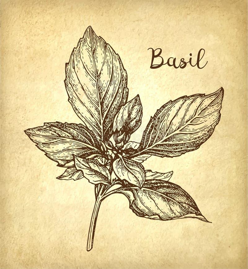 Schizzo dell'inchiostro del basilico royalty illustrazione gratis