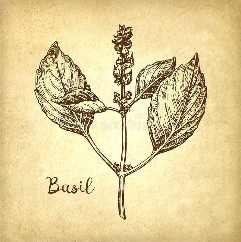 Schizzo dell'inchiostro del basilico illustrazione di stock