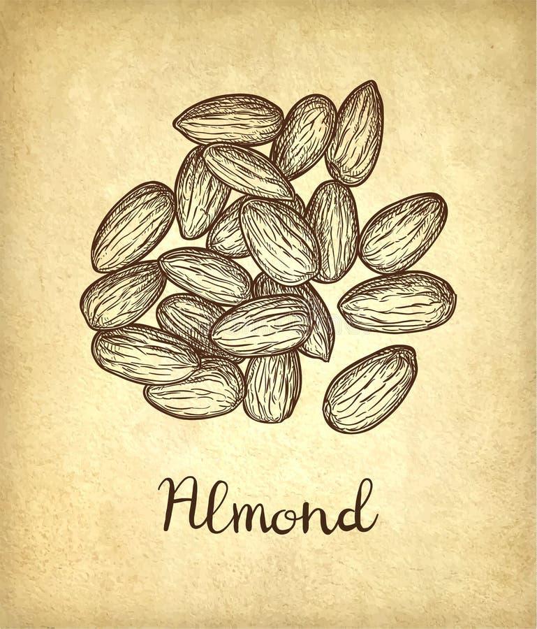 Schizzo dell'inchiostro della mandorla royalty illustrazione gratis