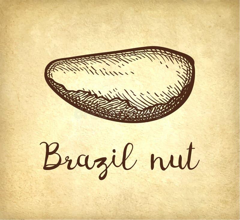 Schizzo dell'inchiostro della noce del Brasile royalty illustrazione gratis
