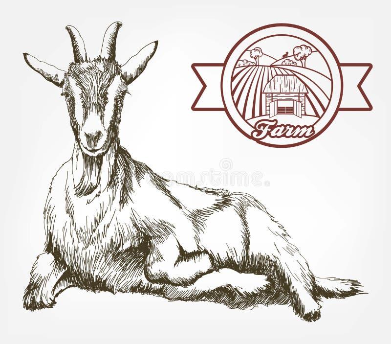 Schizzo della capra disegnato a mano bestiame pascolo animale illustrazione di stock