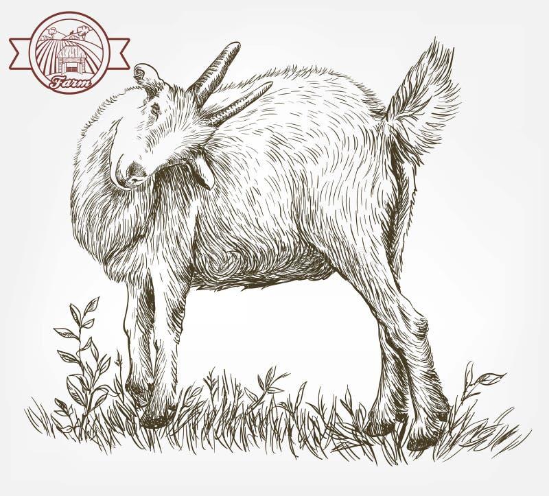 Schizzo della capra disegnato a mano bestiame pascolo animale illustrazione vettoriale