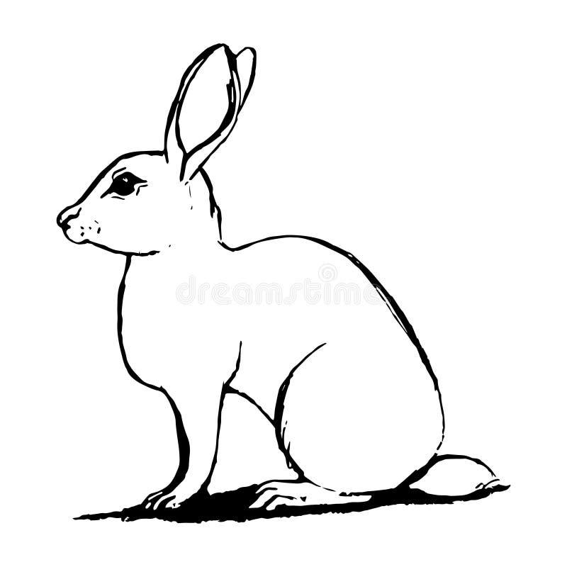 Schizzo della lepre in bianco e nero illustrazione vettoriale