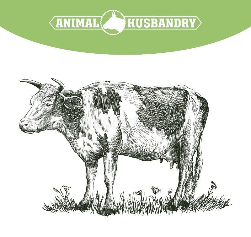 Schizzo della mucca disegnato a mano bestiame bestiami pascolo animale illustrazione di stock