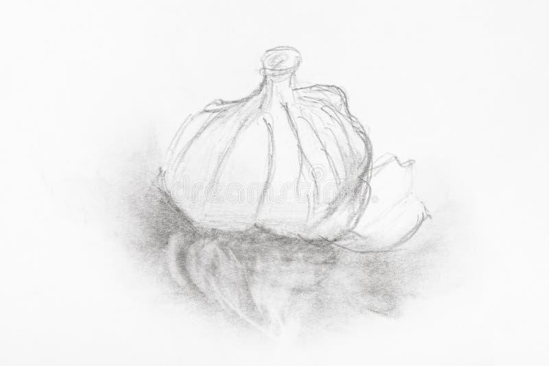 Schizzo della testa di aglio disegnata a mano dalla matita illustrazione vettoriale