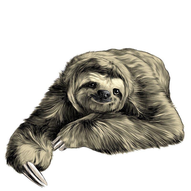 Schizzo di bradipo illustrazione di stock