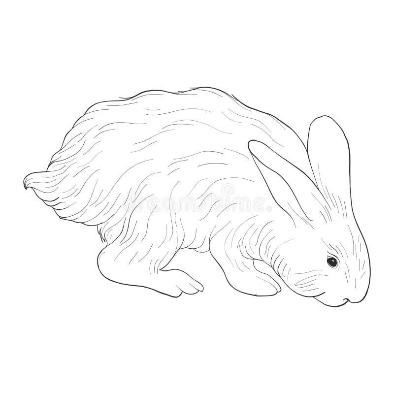 Schizzo di vettore di coniglio illustrazione vettoriale