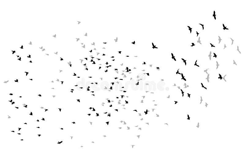Schizzo di vettore degli uccelli di volo royalty illustrazione gratis