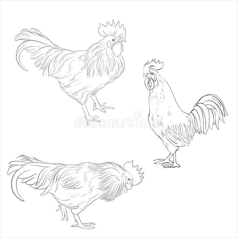 Schizzo di vettore dei galli royalty illustrazione gratis