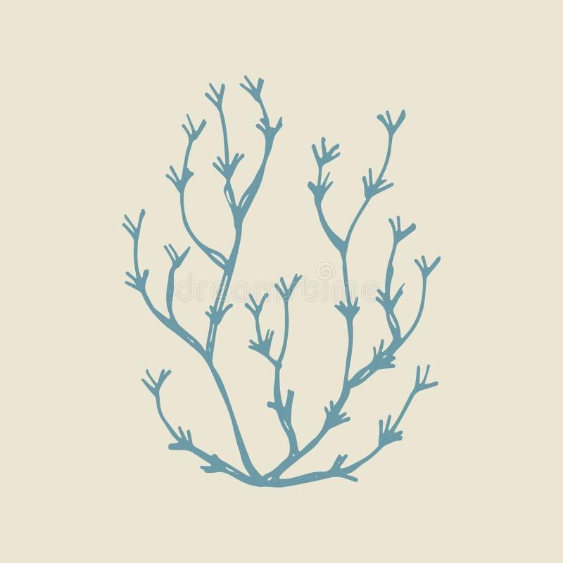 Schizzo di vettore del disegno della mano dell'alga Illustrazione isolata royalty illustrazione gratis