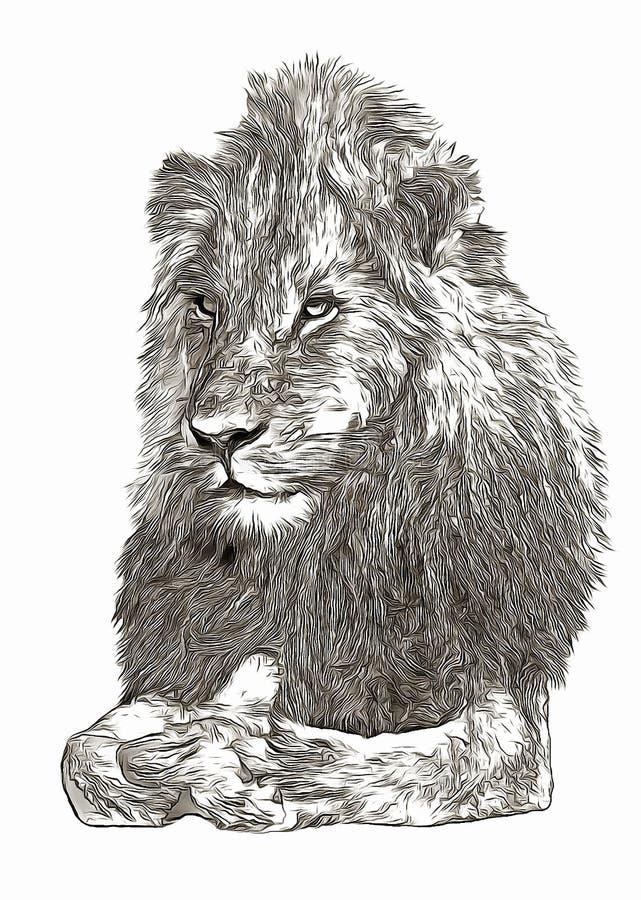 Schizzo digitale del ritratto del leone di Arican fotografia stock libera da diritti