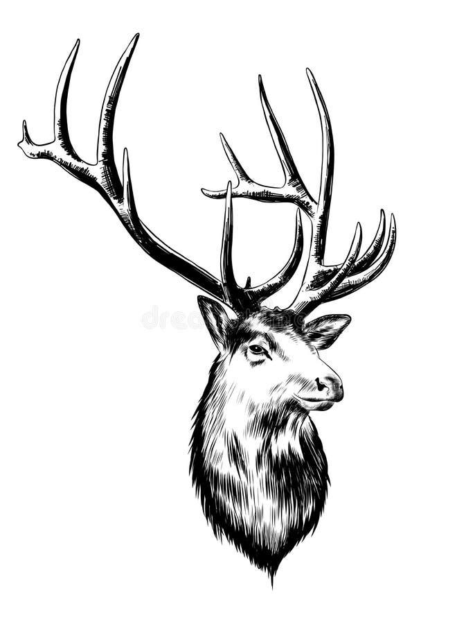 Schizzo disegnato a mano dei cervi nel nero isolati su fondo bianco Disegno d'annata dettagliato di stile incisione royalty illustrazione gratis