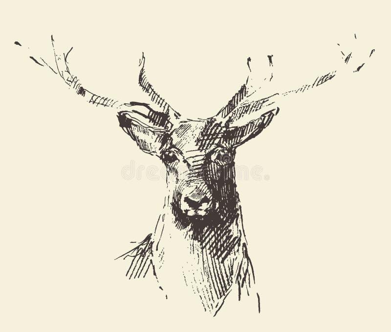 Schizzo disegnato a mano dell'illustrazione dell'incisione dei cervi royalty illustrazione gratis