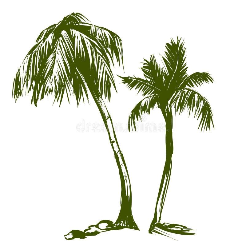 Schizzo disegnato a mano dell'illustrazione di vettore della raccolta della palma illustrazione vettoriale