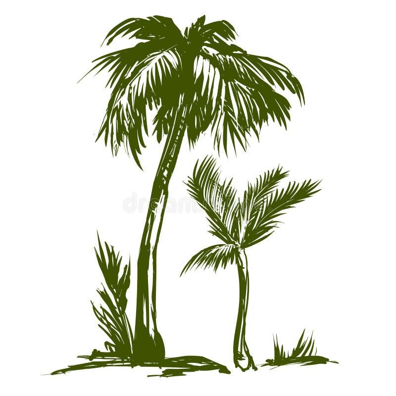 Schizzo disegnato a mano dell'illustrazione di vettore della raccolta della palma royalty illustrazione gratis