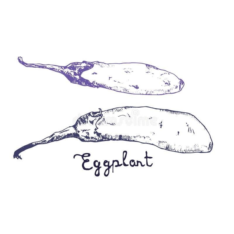 Schizzo disegnato a mano dell'inchiostro di Egglant Varie verdure Schizzi di alimento differente Isolato su melanzana organica bi illustrazione di stock