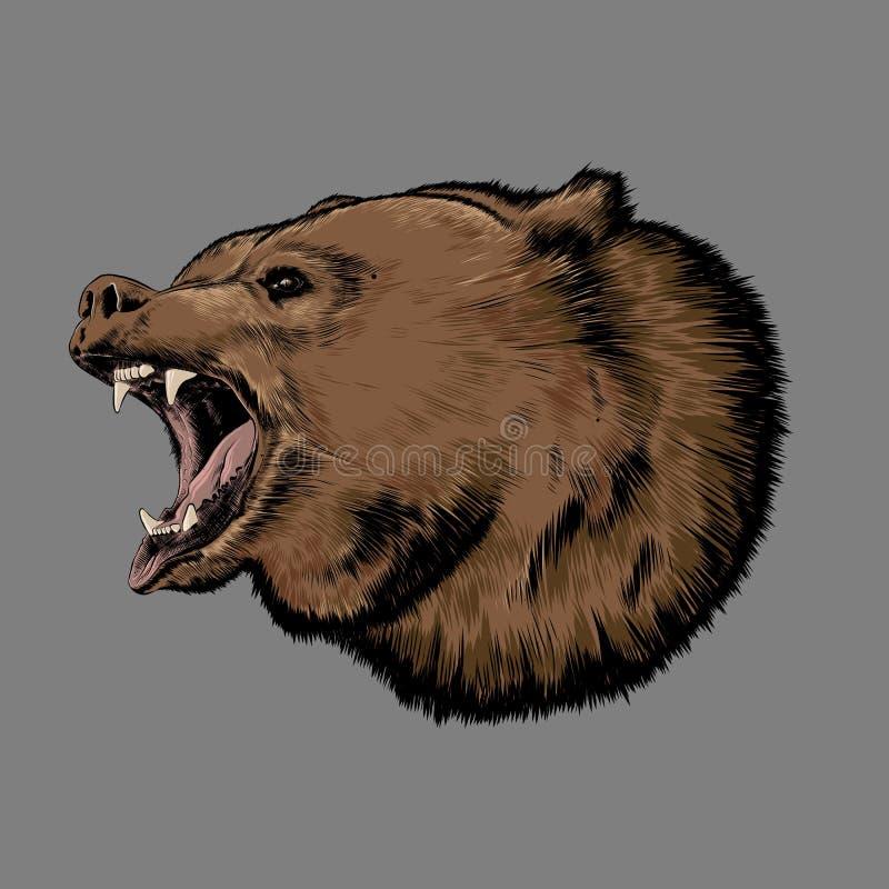 Schizzo disegnato a mano dell'orso a colori isolato su fondo grigio Disegno dettagliato, per i manifesti, la decorazione e la sta illustrazione vettoriale