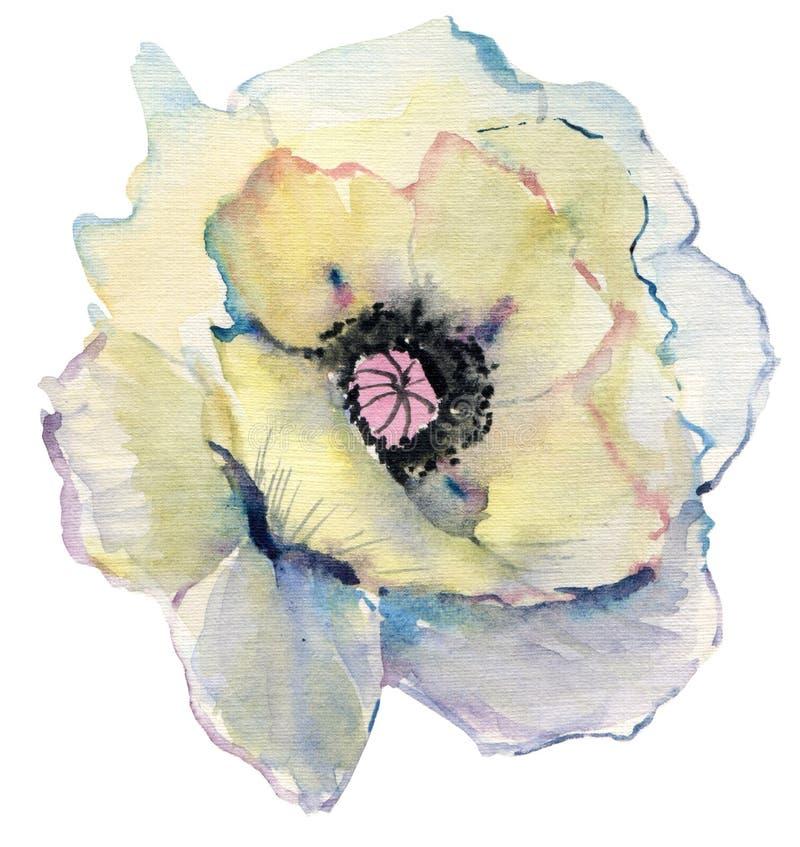 Schizzo disegnato a mano della pittura del fiore dell'acquerello bello papavero dell'acquerello su fondo bianco royalty illustrazione gratis
