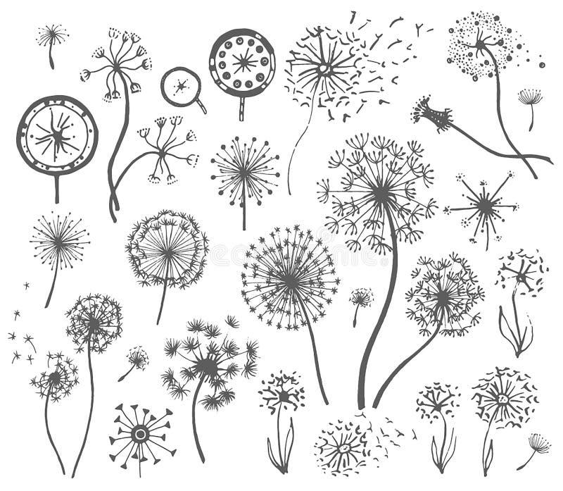 Schizzo disegnato a mano di vettore dell'illustrazione del fiore del dente di leone su fondo bianco illustrazione di stock