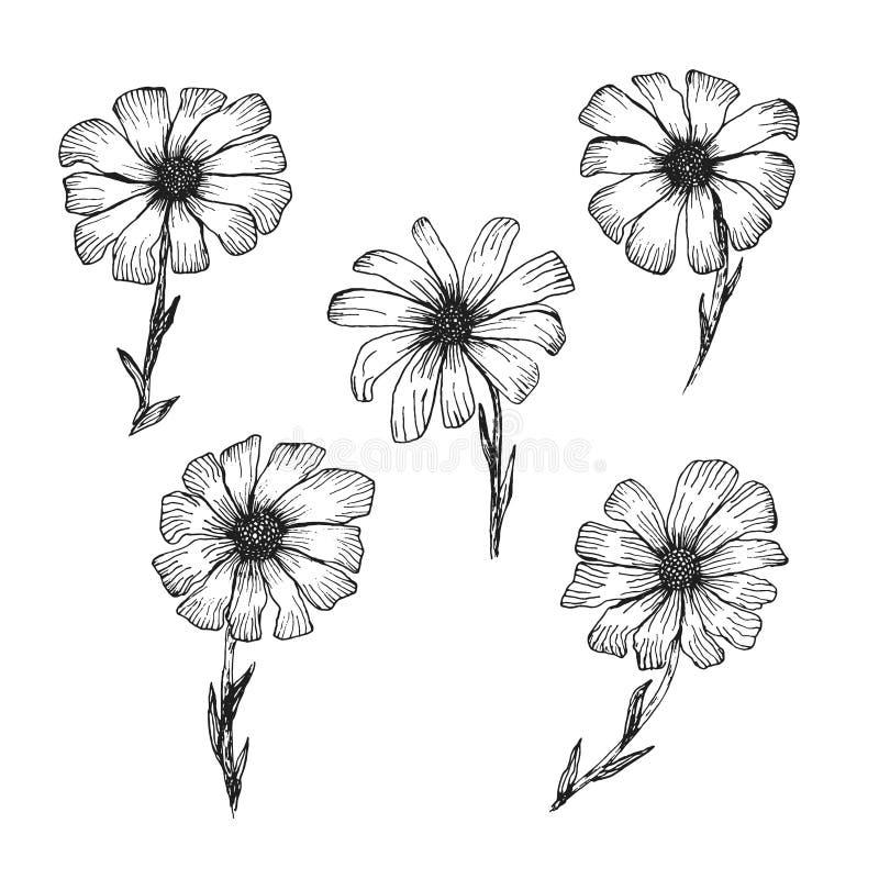 Schizzo nero d'annata della penna del profilo della camomilla illustrazione vettoriale