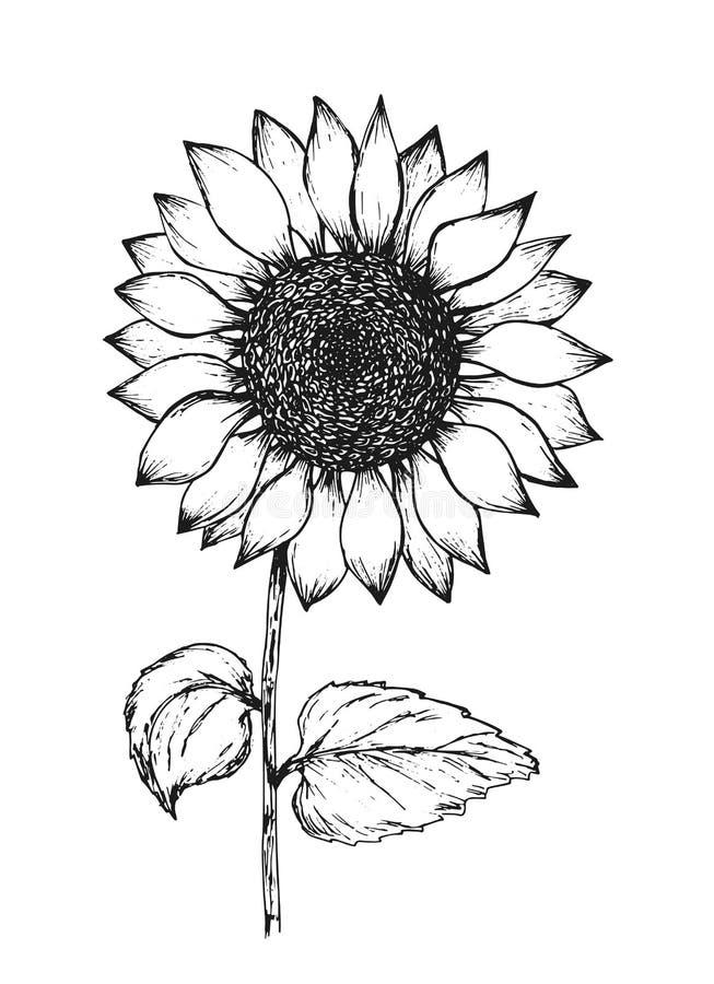 Schizzo nero d'annata della penna del profilo del girasole illustrazione vettoriale
