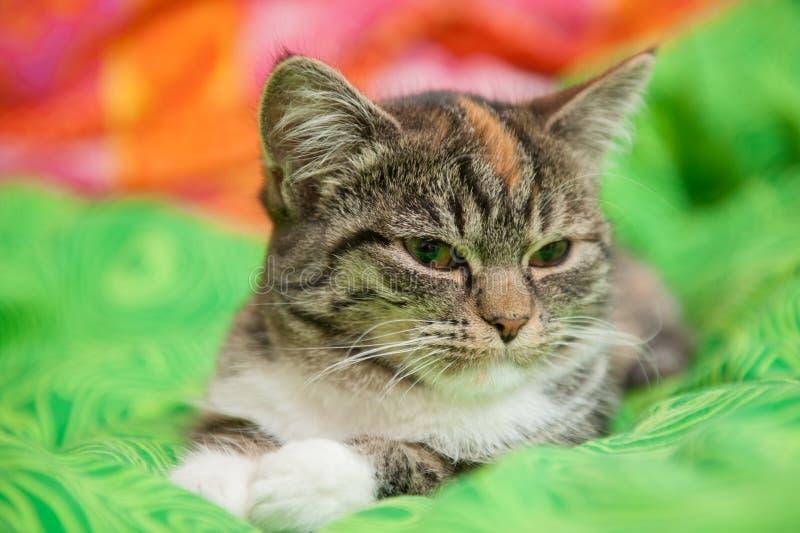 Schläfrige Katze auf grüner Decke stockbild