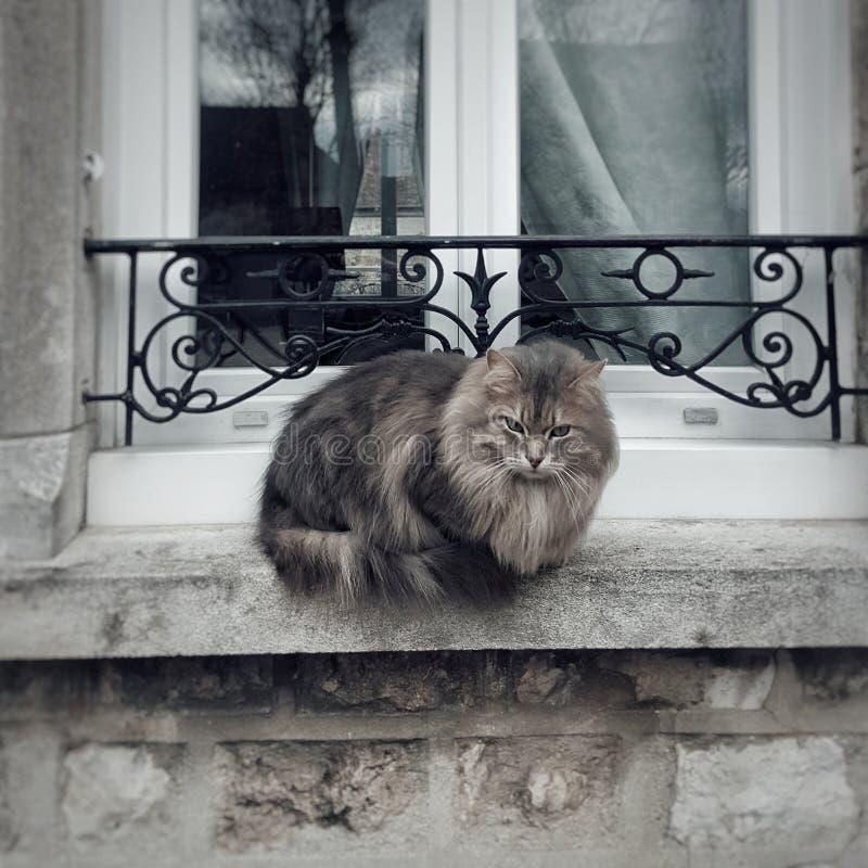 Schläfrige Katze auf Windows in Paris, Frankreich lizenzfreie stockbilder