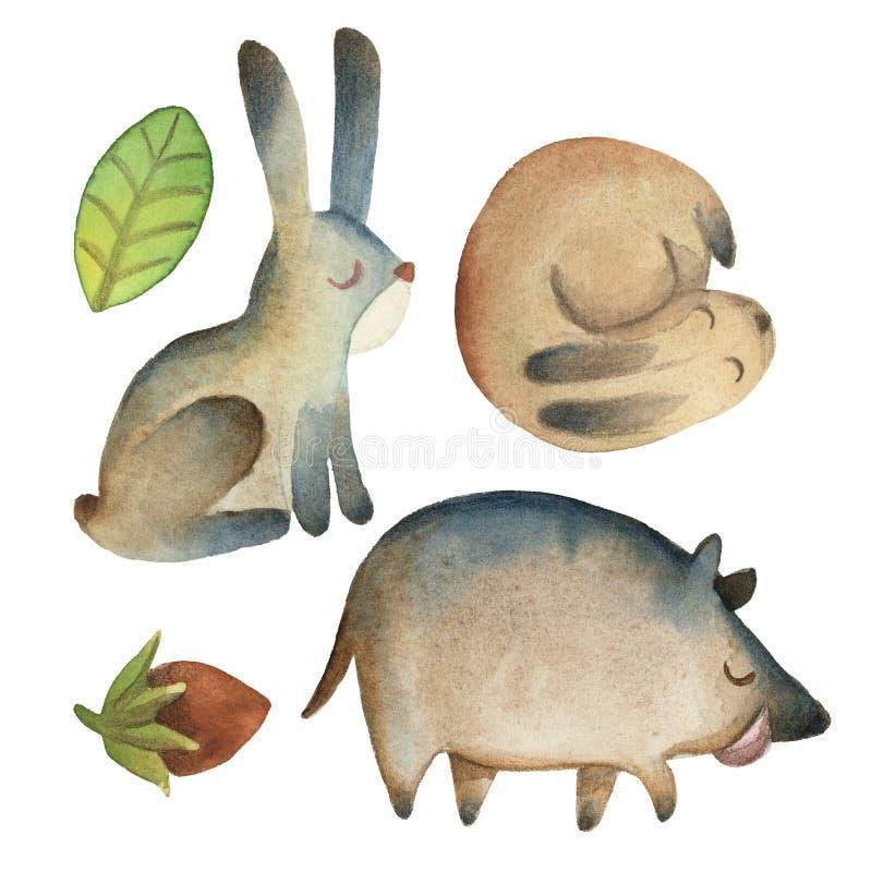 Schl?frige nette kleine Hasen und Eber mit Blatt, Haselnuss lokalisiert auf wei?em Hintergrund lizenzfreie abbildung
