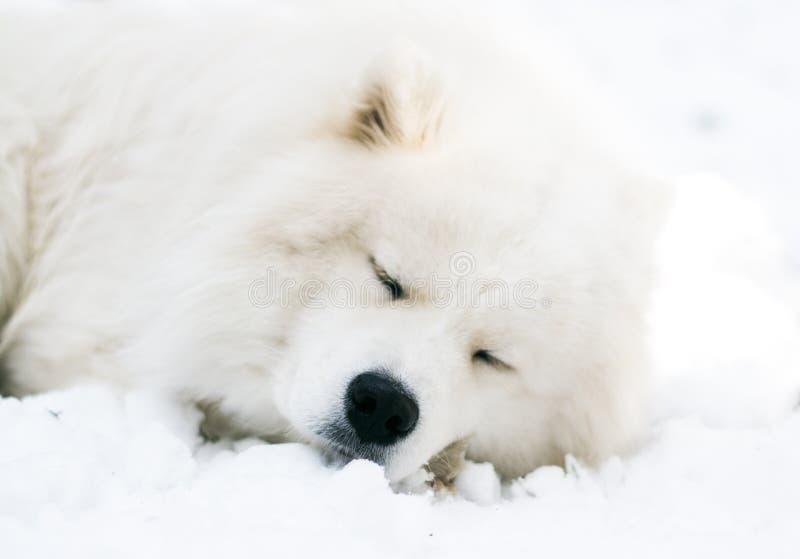 Schläfriger Hund lizenzfreie stockfotos