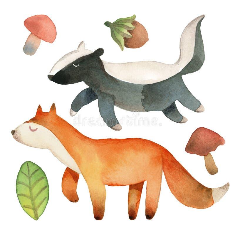 Schl?friger netter kleiner Fuchs und Dachs mit dem Blatt, Haselnuss und Pilz lokalisiert auf wei?em Hintergrund lizenzfreie abbildung