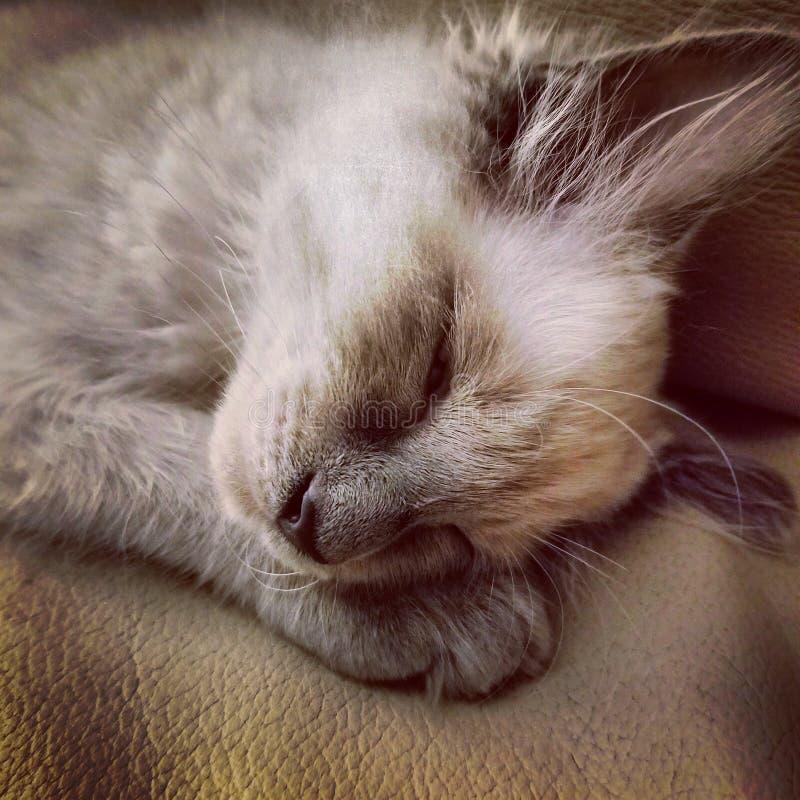 Schläfriges Kätzchen lizenzfreies stockbild