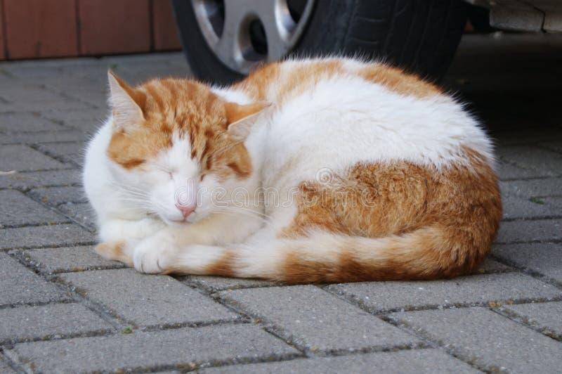 Schläfriges Kätzchen auf dem Bürgersteig stockbilder