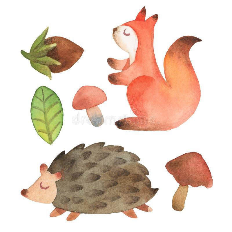 Schl?friges nettes kleines Eichh?rnchen und Igeles mit dem Blatt, Haselnuss und Pilz lokalisiert auf wei?em Hintergrund vektor abbildung